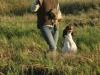 The young dog´s first pheasant! Charleswood Izabelle & Susanne Aalto